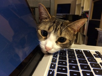 Cat on Computer Laptop